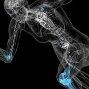Анатомия человека, наука, с которой должен быть знаком каждый