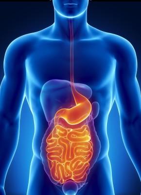 Роль желудка в организме