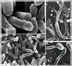 mikroorganizm