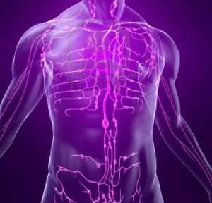 Лимфатическая система состоит из множества лимфоузлов