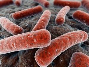 Возбудители туберкулеза устойчивы к действию внешней среды