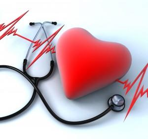Сердце является важнейшим органом человека