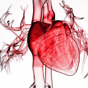 Предсказать порок сердца у будущего ребенка возможно