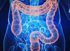 Наше качество питания приводит к накоплению шлаков и токсинов в кишечнике