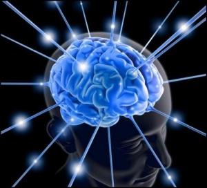 Полушария конечного мозга соединяются между собой мозолистым телом