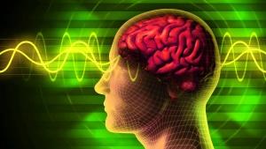 Головной мозг получает сигналы от органов чувств