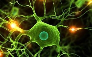 Болезни мозга могут быть различных видов