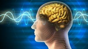 Продолговатый мозг выполняет три основные функции