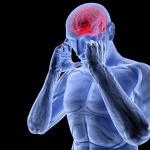 Функции продолговатого мозга человека: в чем они заключаются?