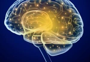 Продолговатый мозг сочетает особенности спинного мозга и начального отдела головного мозга