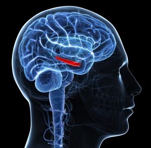 За выработку кортизола отвечает гипоталамус