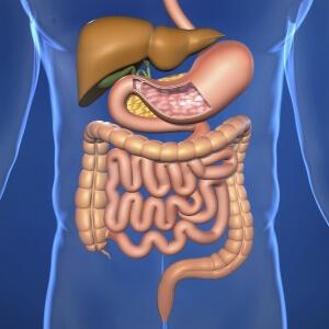 К развитию язвы двенадцатиперстной кишки приводит несколько факторов