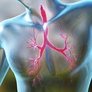 Астматический бронхит развивается по различным причинам