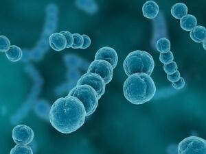 Скарлатина развивается по причине размножения стрептококка