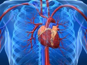 Слабые сосуды говорят о болезнях сердца