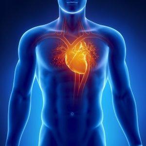 При диспластической кардиопатии нарушается структура тканей мышц сердца