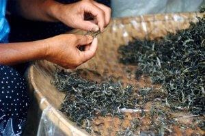 Сигареты из чая: польза и вред