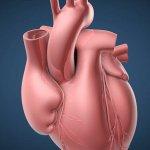 Пересадка сердца: стоимость в России и Индии, особенности проведения операции