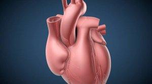 Пересадка сердца: стоимость в России и Индии, показания и противопоказания к пересадке, возможные прогнозы и осложнения