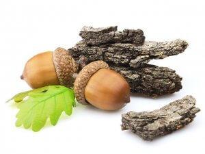 Целебные свойства дубовой коры